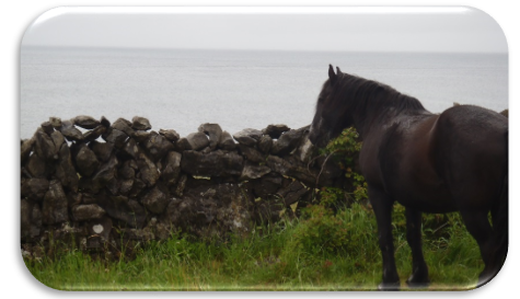 aran_horse