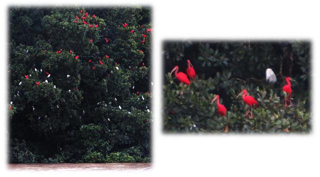 iletlamere_ibis