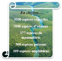 faune_chiffres