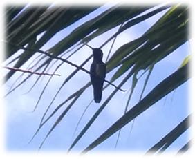 faune_colibri