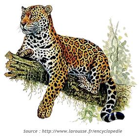 faune_jaguar