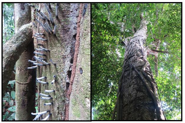 saul_arbres