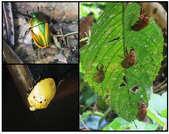 saul_insectes