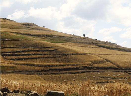 simien_landscape4