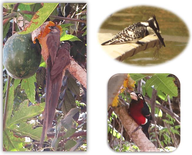 bd_birds