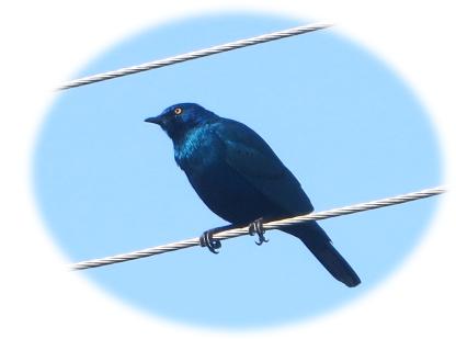 bd_bluebird